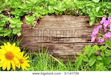 Summer background with old wooden plank, flower, grass and green leaves