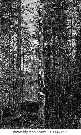 Wood ancestors in the New Kirk, Finland. Engraving by  Rashevky. Published in magazine