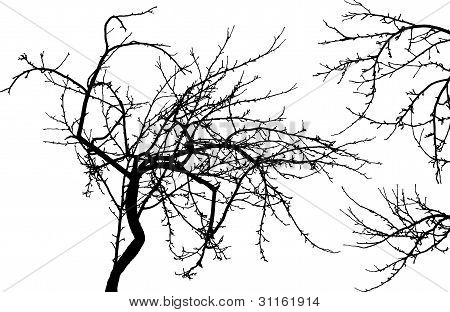 Tree And Two Branches