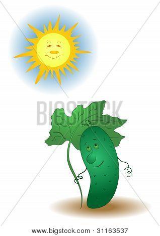 Cucumber and sun