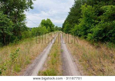 countryside road in green forest