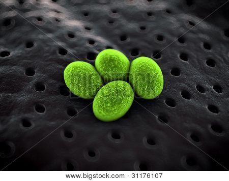 Bacteria close up