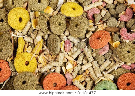 Rodents Food