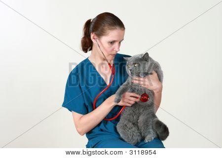 Tierarzt und die Katze