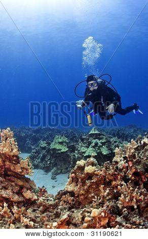 Scuba Diver With A Camera In Kona Hawaii