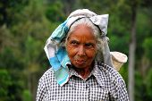 Portrait Of Tamil Tea Picker