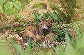 Beautiful Cat Portrait In Nature. Cat Sitting In Flowers. poster