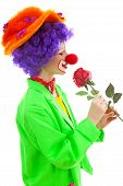 image of clown rose  - portrait of child dressed as colorful funny clown smelling red rose over white background - JPG