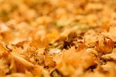 Harvest Time. Blur Autumn Foliage. Fallen Golden Leaves On Ground. Nature Background. poster