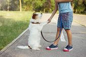 Little Child Playing With Its Dog  Giving High Five. Obedience And Unconditional Love Concept. poster