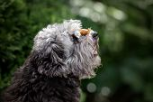 Adorable Mixed Breed Dog Posing With A Snail On Her Nose poster