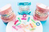 Orthodontic Model And Dentist Tool - Demonstration Teeth Model Of Varities Of Orthodontic Bracket Or poster