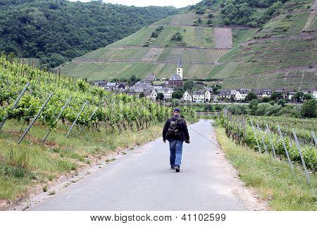 Walking through the  wineyards