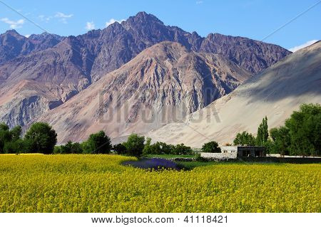 Rape Field, Ladakh, Northern India