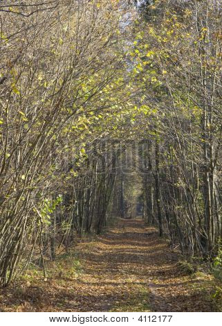 Ground Road At Autumnal Sunny Day Across Forest