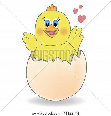 chicken coming out of a  egg