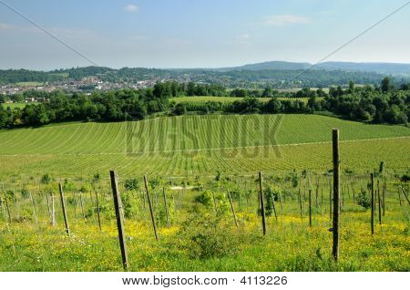 Denbies Wine Esate, Surrey, United Kingdom In Springtime