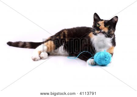 Cat Playing With A Wool