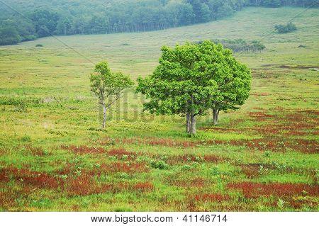 shenandoan national park