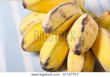 carbada banana also known as saba