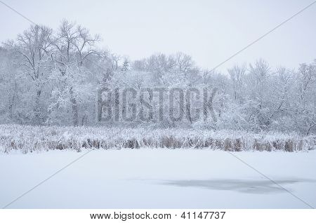 Snow Covered Landscape With Trees And Grass At The Edge Of A Frozen Lake