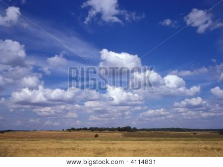 Blue Sky And Yellow Grain