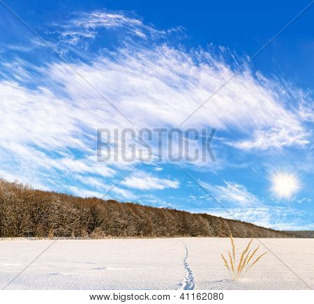 Beautiful landscape of winter field with the animal tracks