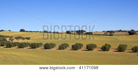 Panorama Of The Fields In Castile-la Mancha, Spain..