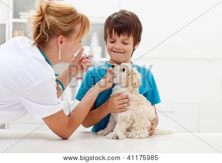 Boy at the veterinary doctor with his dog