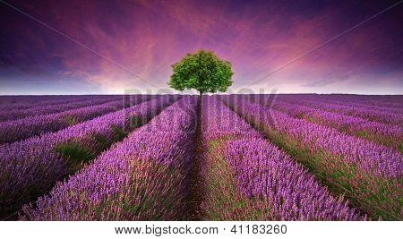 Impresionante atardecer de verano campo paisaje con árbol en horizonte