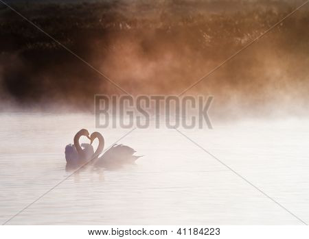 Mated Pair Of Swans On Misty Foggy Asutumn Fall Lake Touching Scene