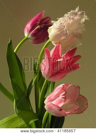 pink,white and purple tulips in posy against gold background