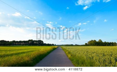 Fresh Green Farmlandscape With Road