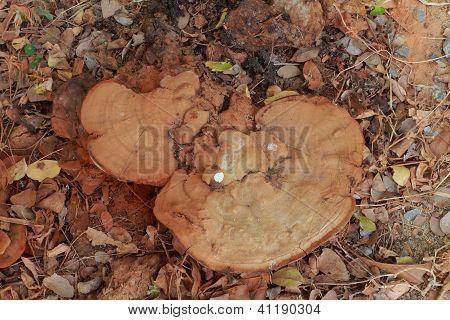 Fungi in soil