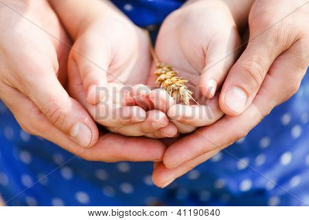 Hands Of A Mother And Her Little Daughter Holding Wheat