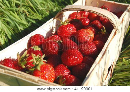 Fresh strawberries in a punnet on the grass