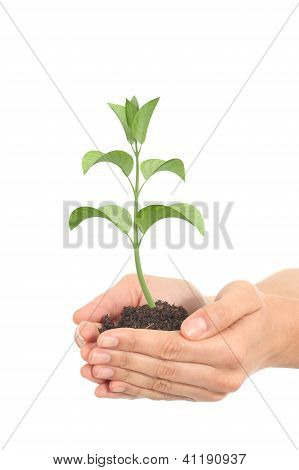 Little Render Of A Plant Growing In A Woman Hands