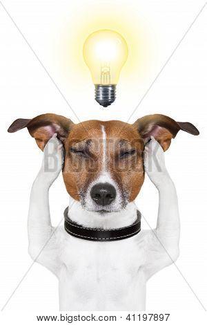 Smart Intelligent Dog