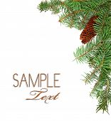 Christmas Rustic Image Of Pine Tree Stems And A Pinecone