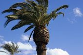 Palm Trees With Blue Skies poster