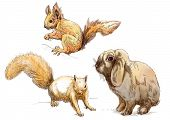stock photo of cony  - A hand drawn collection of two animals  - JPG