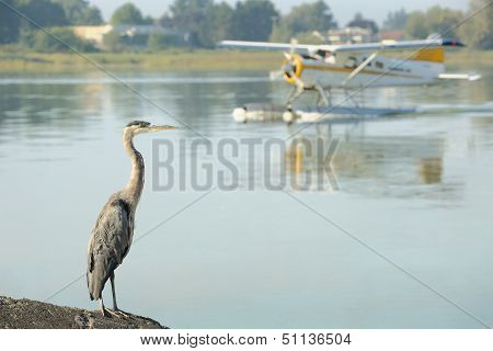 Floatplane and Heron, YVR, Richmond, BC