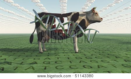GMO Business Cow