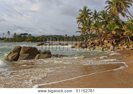 Rugged Coastline With Rock And Palm Trees