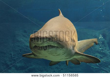 Shark floating in water