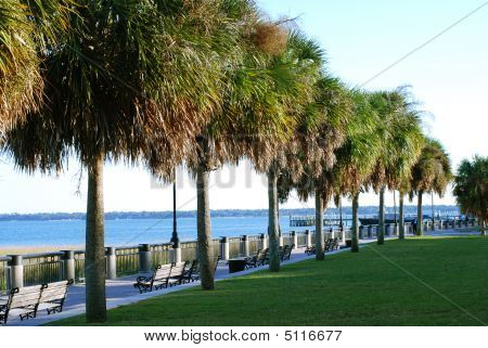 Row Of Palmettos