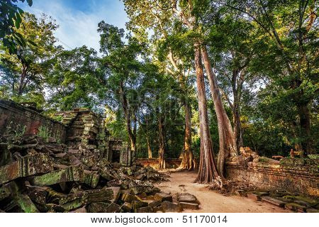 Jungle Forest at Angkor Wat Area in Cambodia