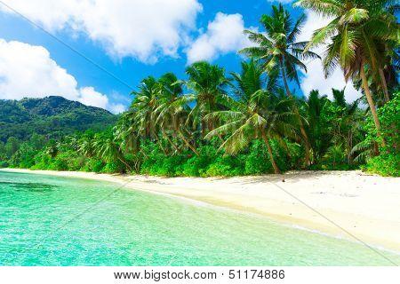 Shore Dream Tranquility