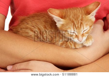 Sleepy little red kitten in hands close up
