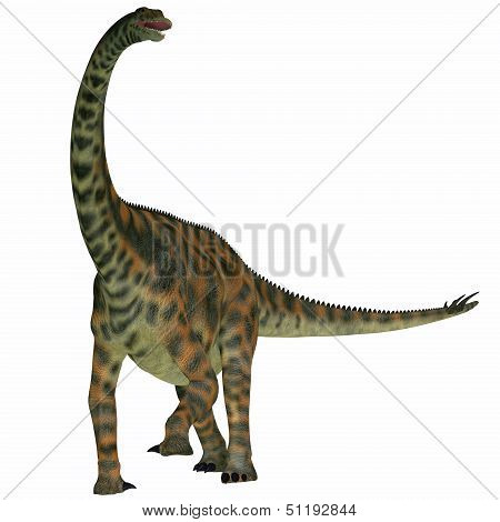 Spinophorosaurus On White